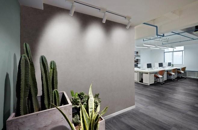 ambiente com uma parede com vinílico marrom e um cacto no vaso a frente