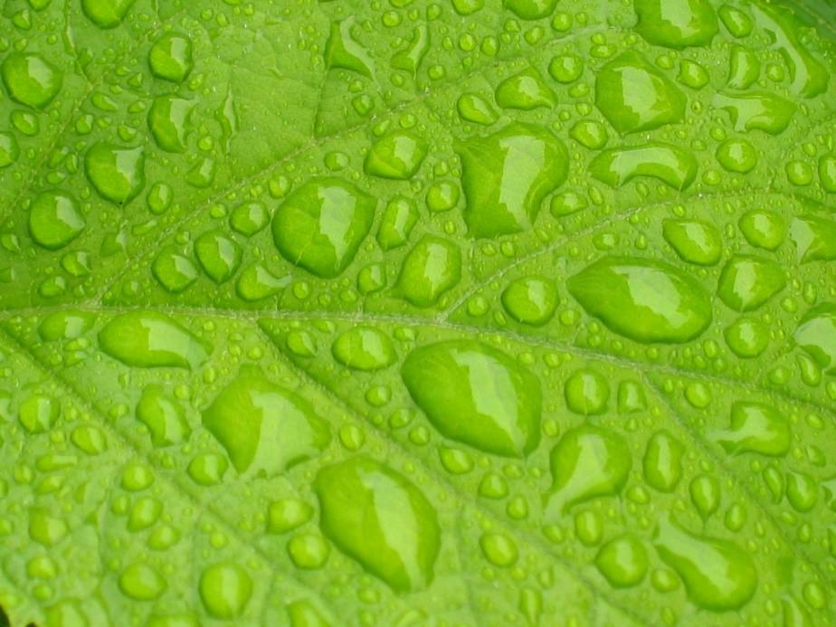 folha de planta com gotas de agua