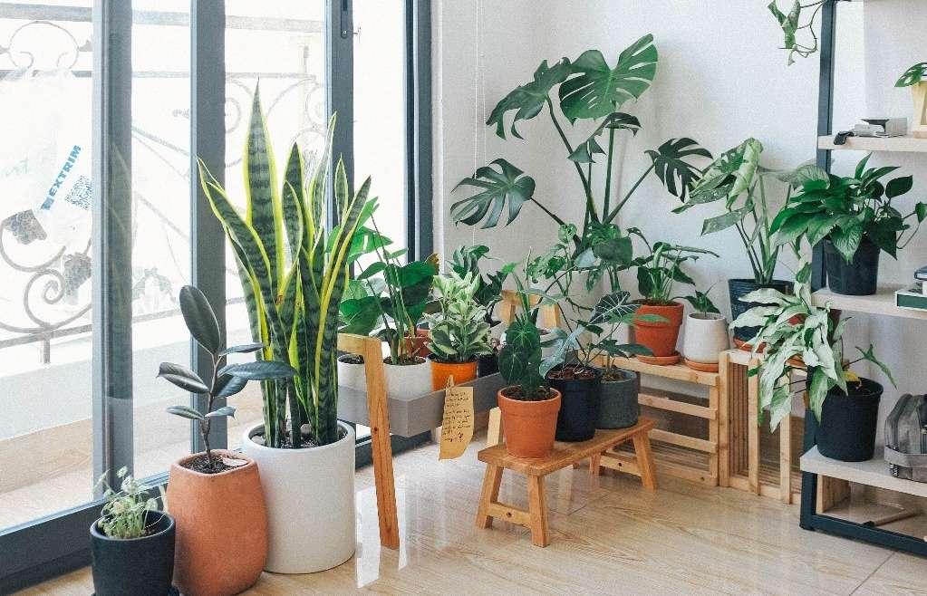 Paisagismo dentro de casa: acrescente frescor e aconchego aos ambientes