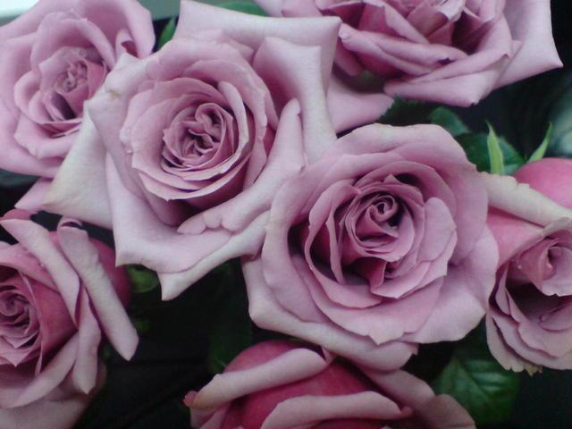 tons-pastel-rosas-natureza